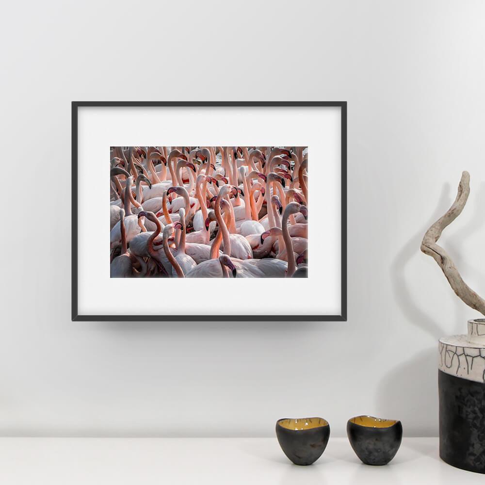 camargue photographie fclassic