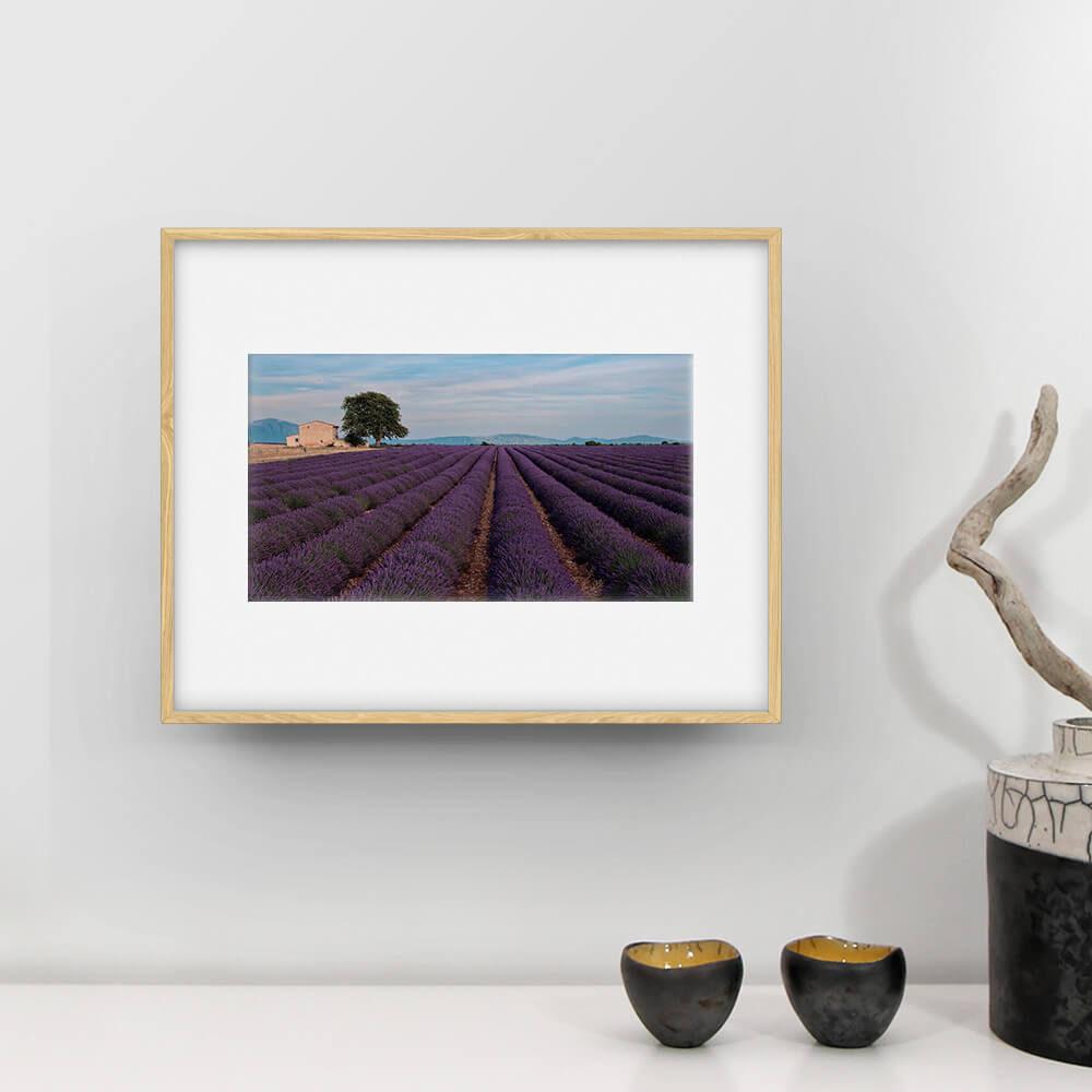 fclassic lavande valensole photographie