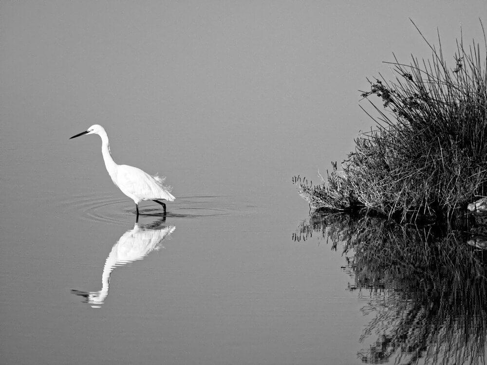 Laurent Gayte Camargue Photographie