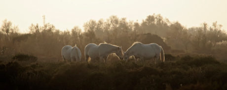 Laurent Gayte Camargue Photographie