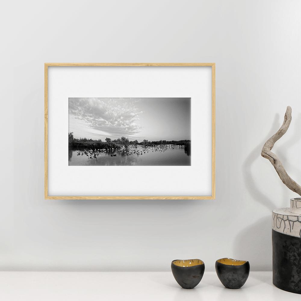 photographie camargue flamants fclassic