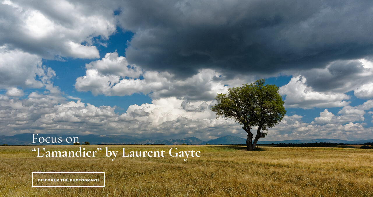 Valensole Photo Provence Almond Tree