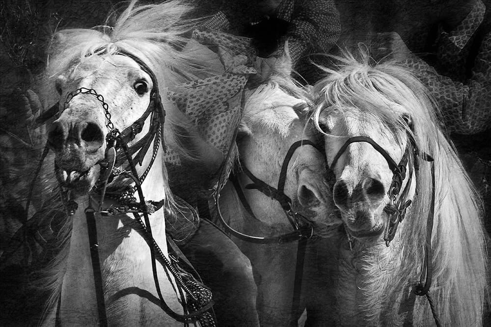 Karine Chavas Camargue Photographie