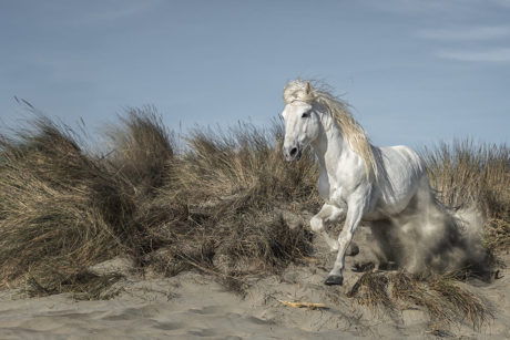 Lucie Bressy Photo d'art Camargue