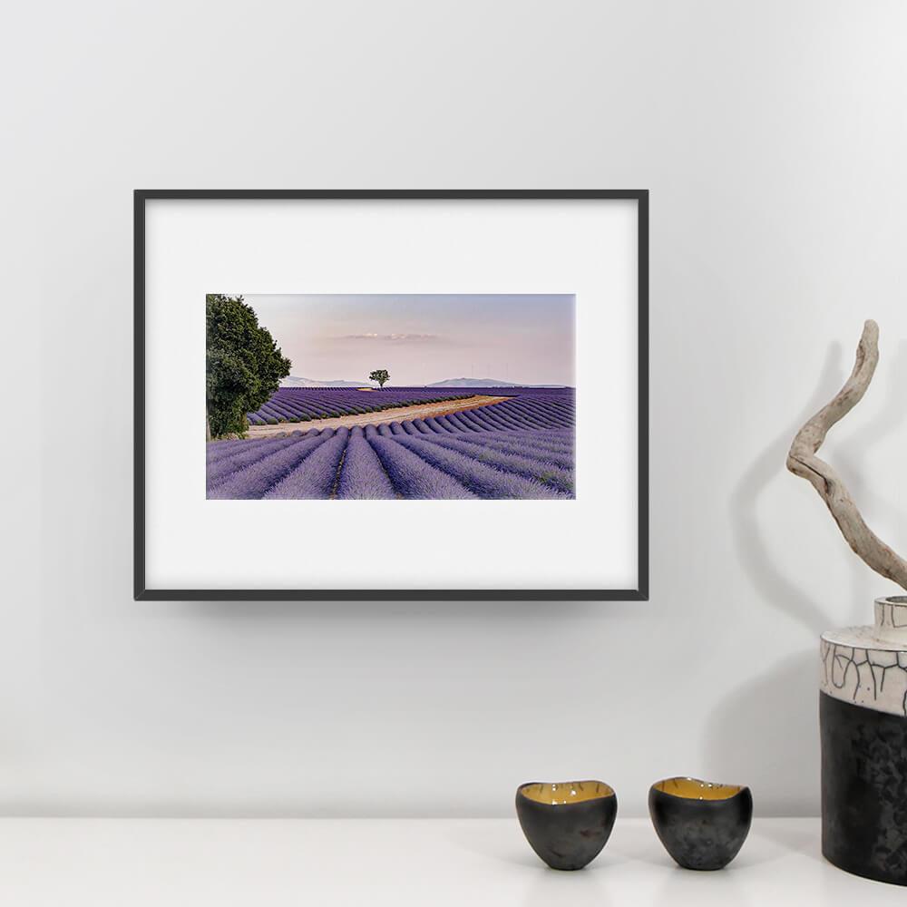 Champs de lavande à Valensole - Photographie Robert Hale