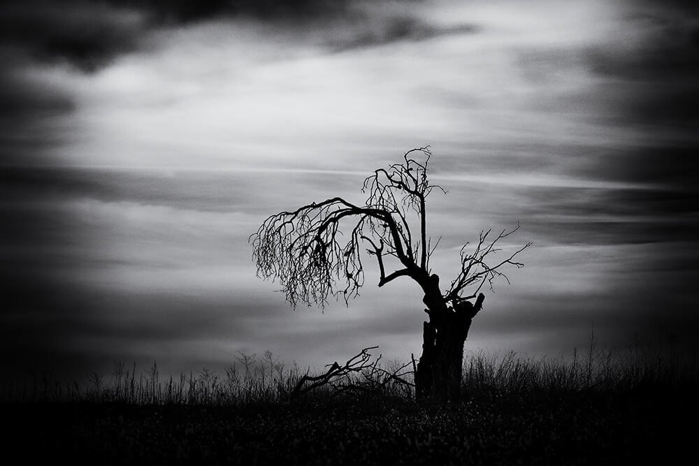 Photographie Laurent Gayte - Valensole