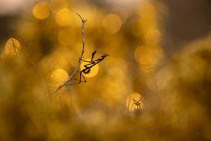 Photographie d'insectes - Thibault Andrieux