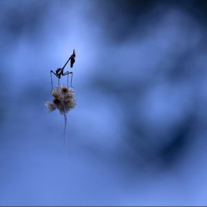 Photographie insecte - Thibault Andrieux